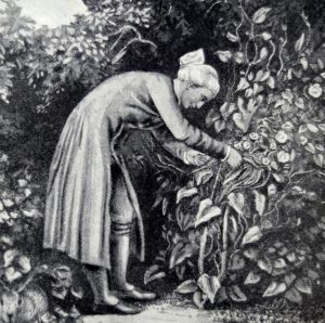Engraving of William Cowper in his garden by G. H. Smith